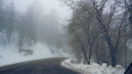 snowflake mountain pinewoods street snowwhite