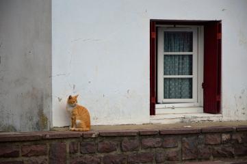 cat katu animal pintoresco travel freetoedit