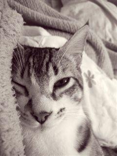 cats pets petsandanimals