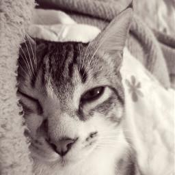 pccutepets cutepets cats pets petsandanimals