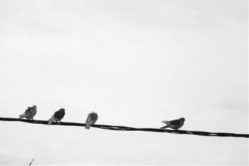 birds simple blackandwhite photography