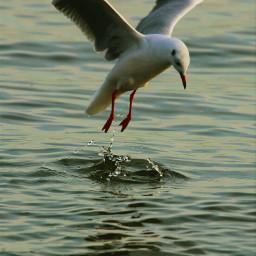 beach nature bird