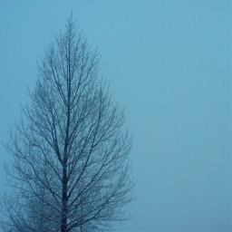 dawn winter dpcwinterminimalism