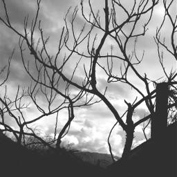 freetoedit photography
