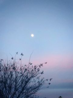 beautiful sky evening serene south freetoedit