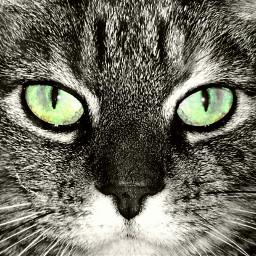 freetoedit dpcpets petsandanimals cat eyes dpcanimaleyes