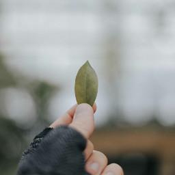 freetoedit nature hands fingers leave