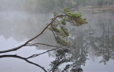 tree lake nature