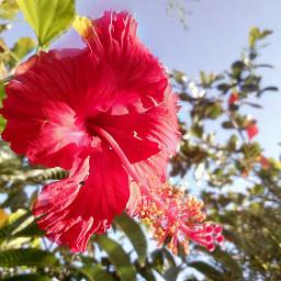 nofilter naturephotography flower freetoedit