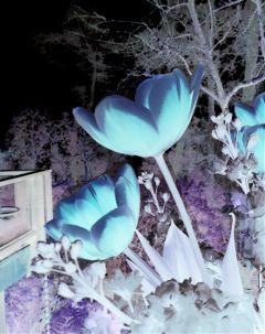 freetoedit dreamscape flowers