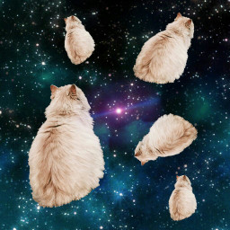 iphonewallpaper epic cats space tutorial
