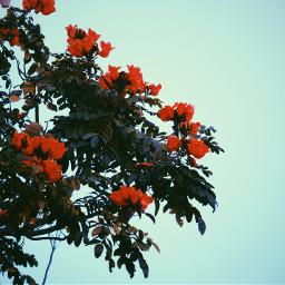 freetoedit photography nature flower tree