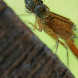 macro macrophotography insect closeup nature