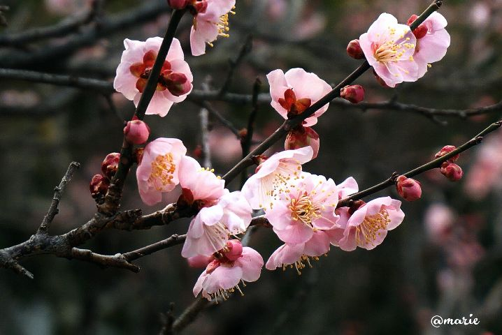 photography blossom spring freetoedit
