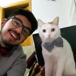 cat kitty gato madrid mypet freetoedit