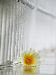 rain flower freetoedit