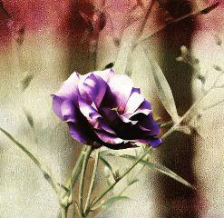 flowerpower flower flowers flowershot floweredit freetoedit