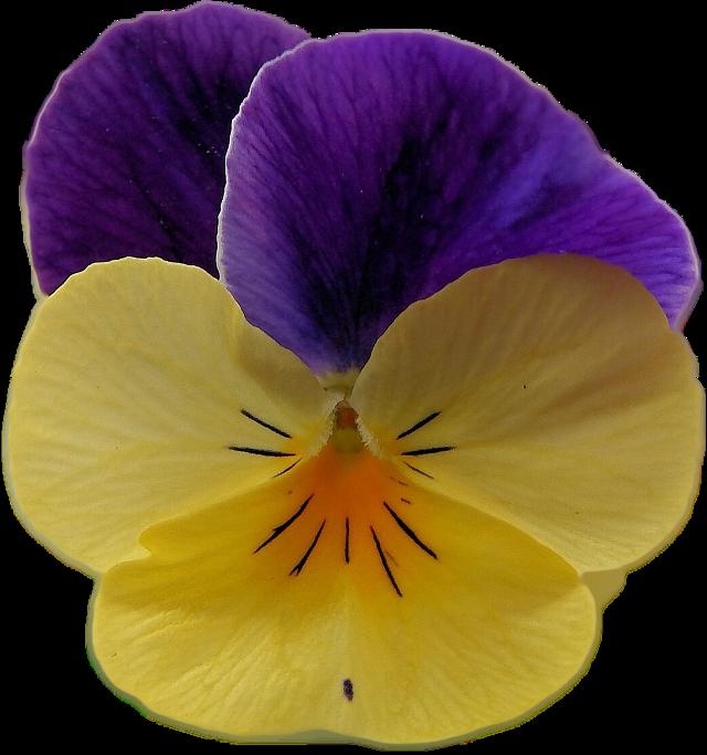 #FreeToEdit #ftestickers #flower