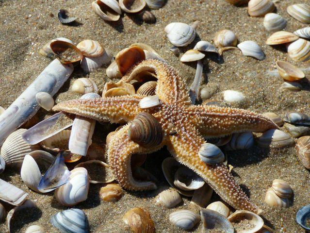 photography beach shells starfish