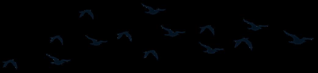 birds silhouette nature freetoedit