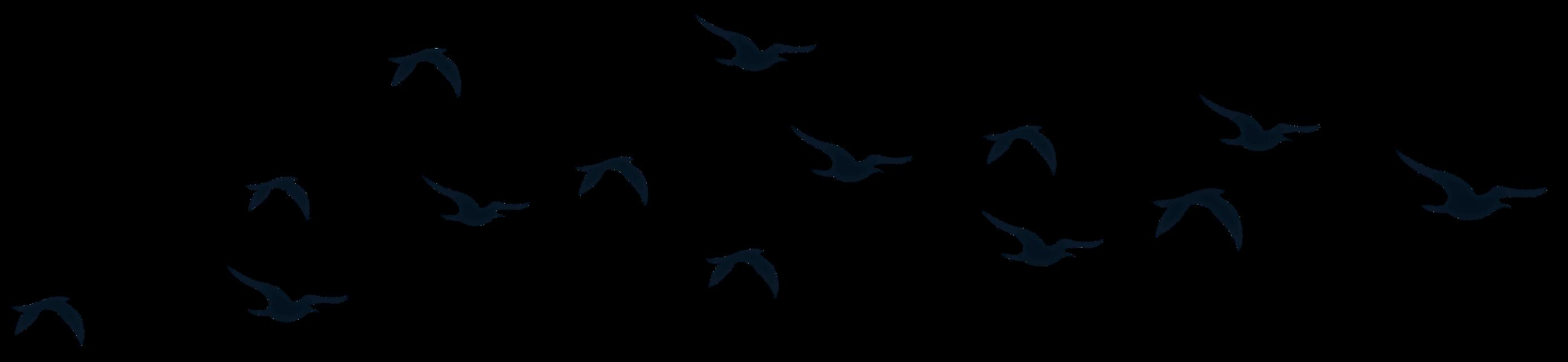 #birds #silhouette #nature #FreeToEdit