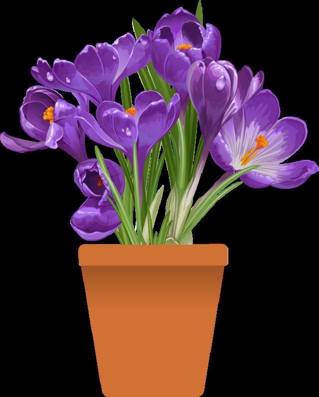 #flowers #purple