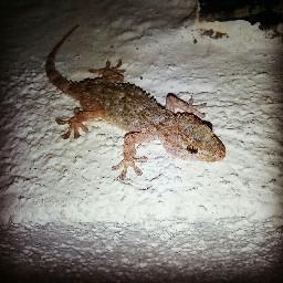 dragonmodelo visitantenocturno dragon meencanta freetoedit