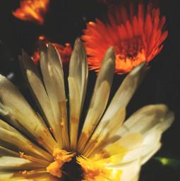 freetoedit spring springtime hdrphotography dramaeffect