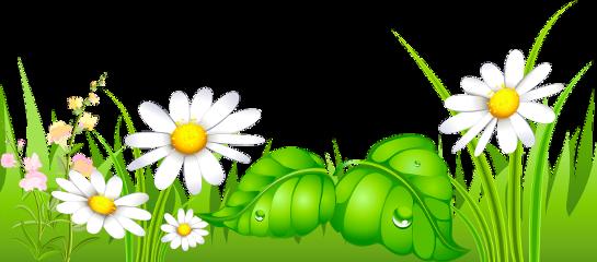 nature grassflower freetoedit